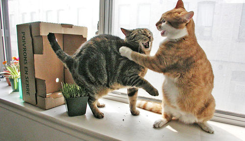 fighting-cats