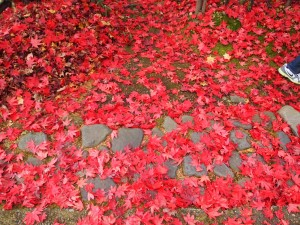 Fallen Red Maple Leaves Japanese Aesthetics