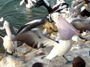The Feeding Frenzy of Feathered Friends
