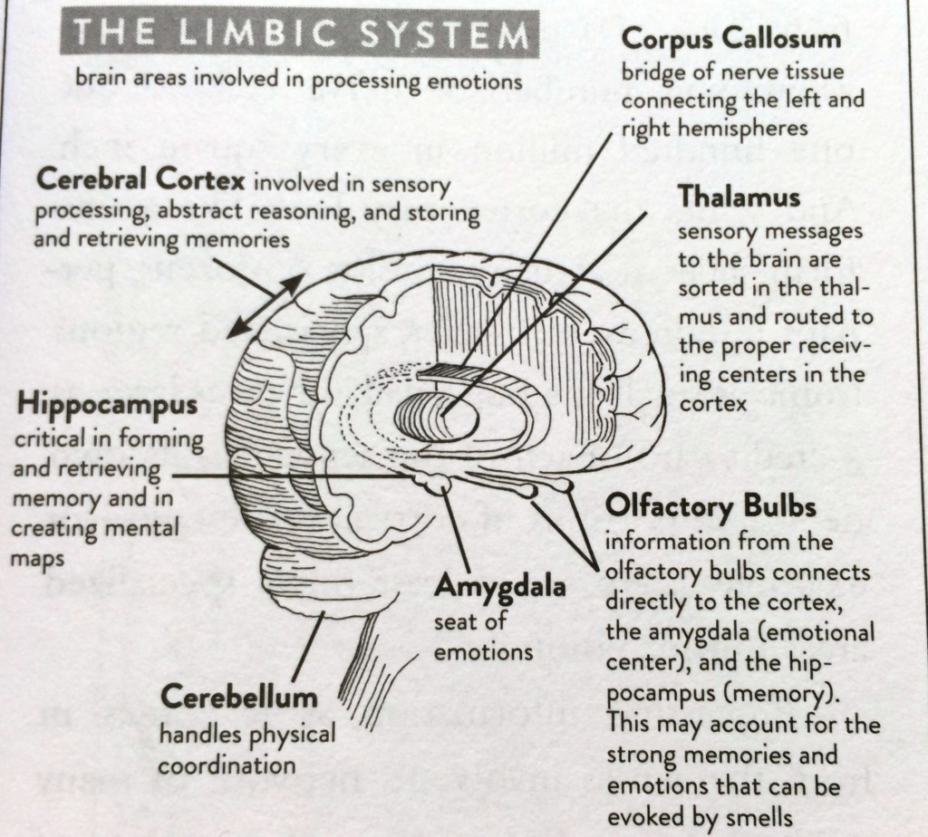 Limbic System Retraining